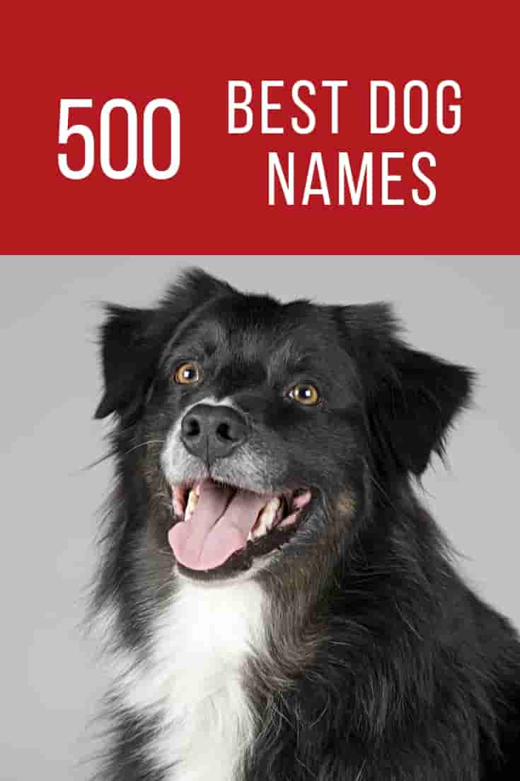 Best Dog Names | Top 500 Male and Female Dog Names | Dogs
