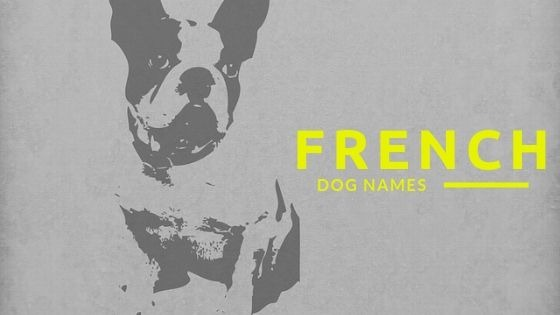 TOP 500 FRENCH DOG NAMES [ UPDATED 2019 ]